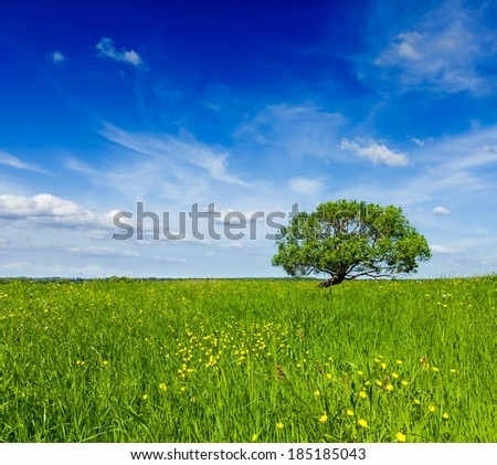 Spring summer background - blooming flowers green grass field meadow scenery lanscape under blue sky with single lonely tree - stock photo