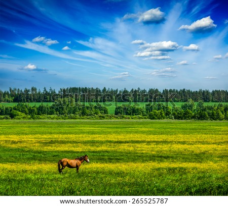 Spring summer background - green grass field meadow scenery lanscape under blue sky with grazing horse - stock photo