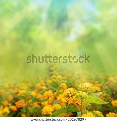 Spring, summer flower background - stock photo