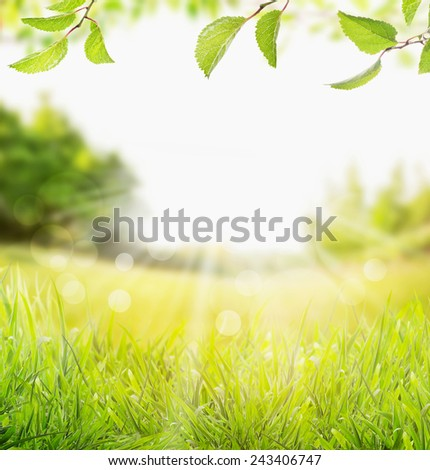 spring summer nature background with grass, trees branch with green leaves and  sun rays with bokeh - stock photo