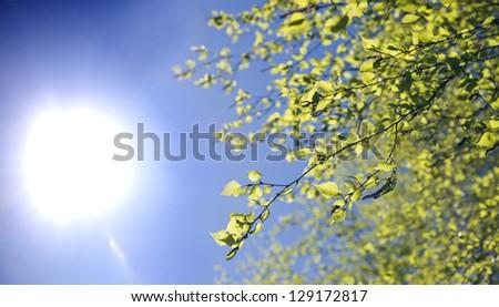 Spring. Sun. Sky. Plant. - stock photo