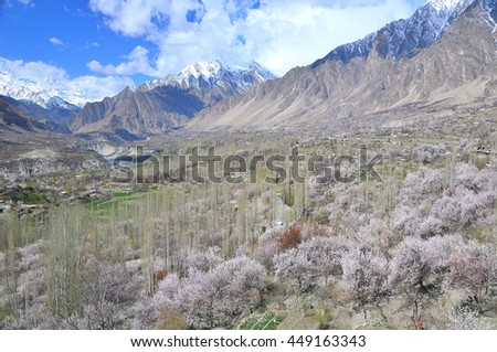 Spring time at Hunza valley with Cherry blossom , northern of Pakistan - stock photo