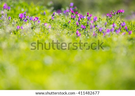Spring Time Background - stock photo
