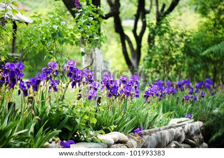 Spring time: blue iris flowers in the forest - stock photo