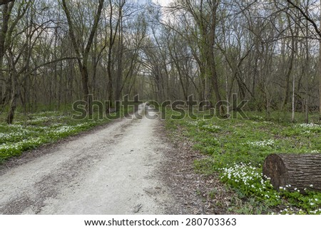 Spring Trail In The Woods - stock photo