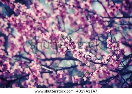 Spring tree flower - stock photo