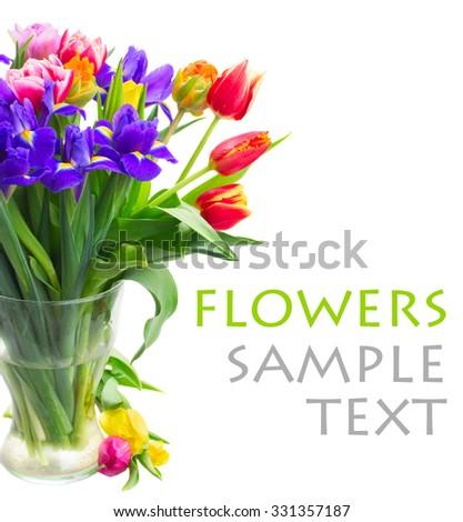 spring tulips and  irises in vase isolated on white background - stock photo