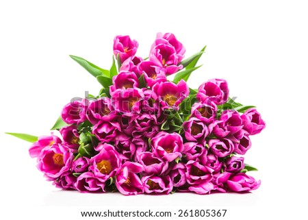 Spring tulips on white background - stock photo