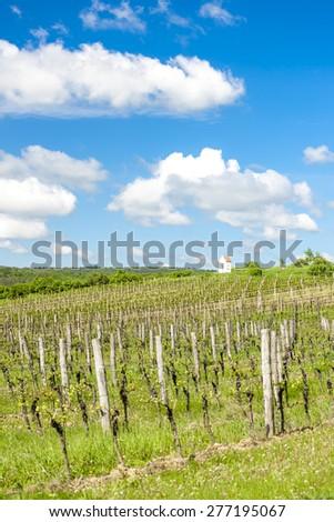 spring vineyard near Hnanice, Southern Moravia, Czech Republic - stock photo