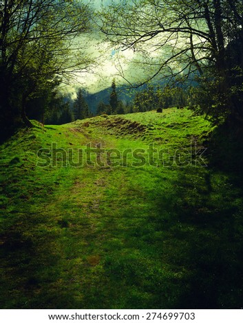 spring water in the forest - stock photo