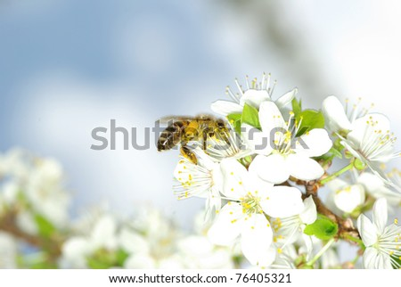 spring white flower and bee - stock photo