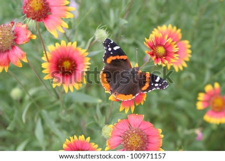 Spring wildflowers and a closeup of a butterfly - stock photo