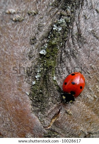 spring will soon be here: ladybird - stock photo