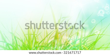 Spring young green grass.nature background - stock photo