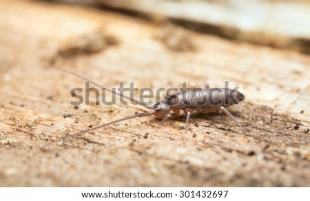 Springtail on wood - stock photo