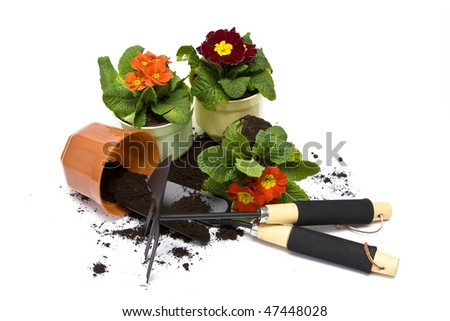 Springtime. Gardening tools, colorful primula and soil. - stock photo