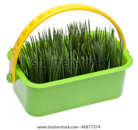 Springtime grass in a vibrant green basket isolated on white with a clipping path. - stock photo