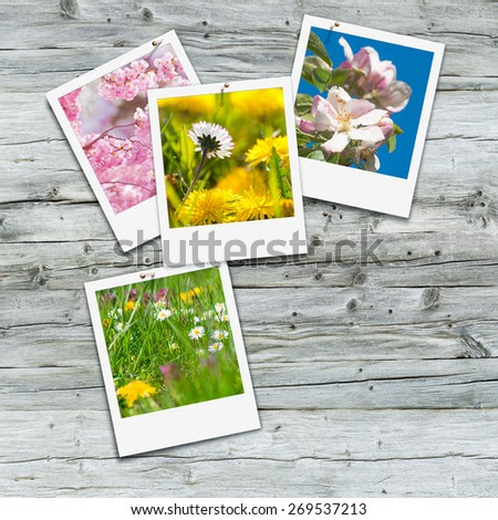 Springtime impressions, collection of vernal snapshots on weathered wooden background - stock photo