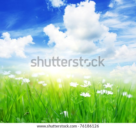 Springtime is the moment for this beautiful flower. Blue sky and sun. - stock photo