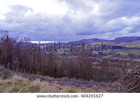 Springtime view across birch trees to the Loch Turret hills from the Knock of Crieff, Perthshire. - stock photo