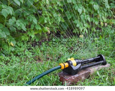 Sprinkler in the garden watering raspberry bushes - stock photo