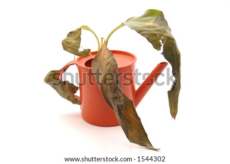 Sprinkling pot with dry plant - stock photo