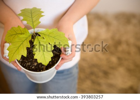 Sprout a young oak tree in a child hands. The concept - the life beginning, care, successful future growth. Oak sapling in hands. Boy going to plant a new oak tree in the garden. - stock photo