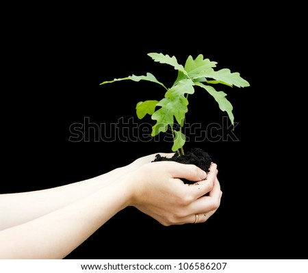 Sprout a young oak tree in a female hands isolated on a black background. The concept - the life beginning, care, successful growth. - stock photo