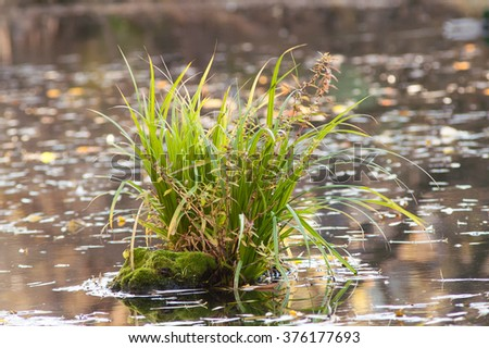 sprout from the stump in the water - stock photo
