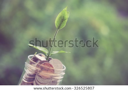 Sprout growing on glass piggy bank in saving money concept with filter effect retro vintage style - stock photo
