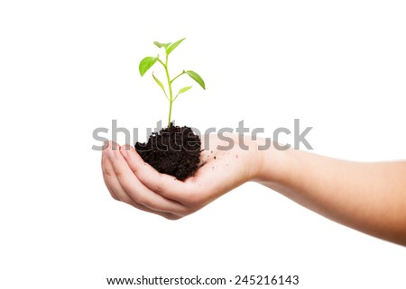 Sprout in children's hands. Seedling isolated on white - stock photo
