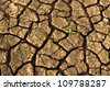 Sprout in dried cracked earth - stock photo