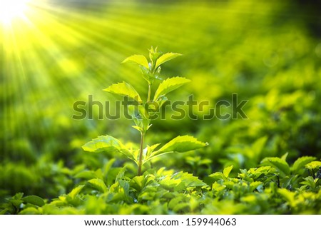 sprout in the sun - stock photo