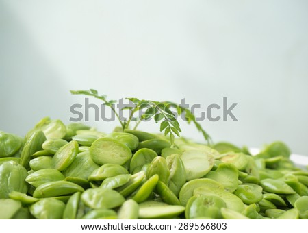 sprout of fragrant that grow from sato twisted cluster bean that is smelly seed - stock photo