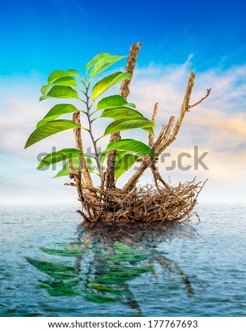 Sprout on dead tree floating in the sea - stock photo