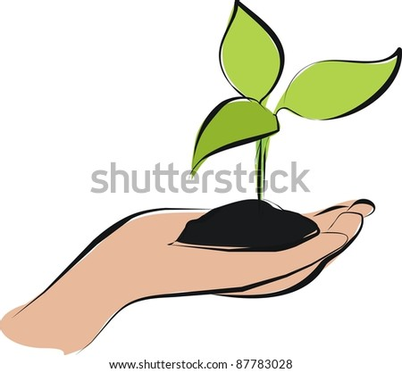 Apple Seeds Sprouting Inside Apple Apple Seed Sprout on Hand And