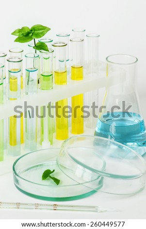 Sprout with green leaves in vitro and laboratory glassware - stock photo
