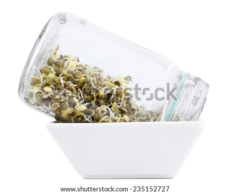 sprouting green lentils in jar technique - stock photo