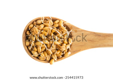 Sprouting whole wheat in a wooden spoon isolated - stock photo