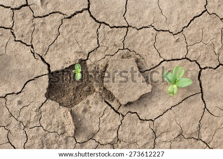 Sprouts fighting for life with natural forces in dried cracked mud - stock photo