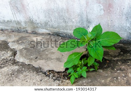 sprouts growing on concrete - stock photo