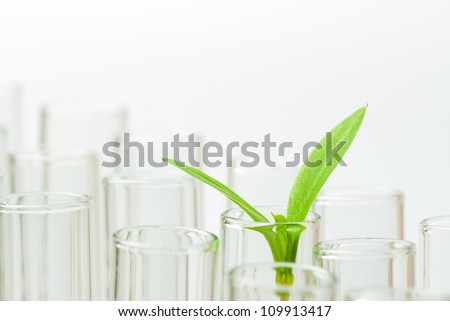 sprouts on test tube - stock photo