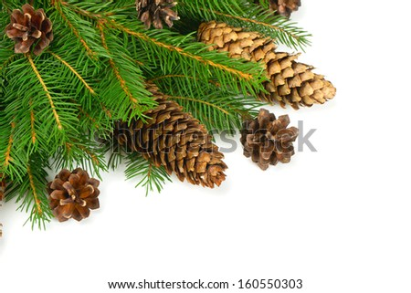 spruce and cones over white - stock photo