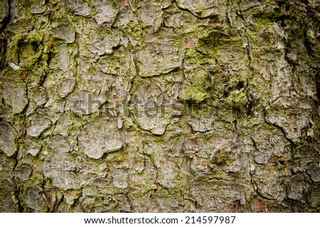 Spruce bark texture with vignette effect - stock photo
