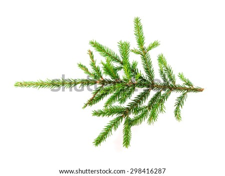 Spruce branch isolated on white background for your design - stock photo
