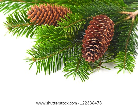 Spruce branches with cones on a white background - stock photo