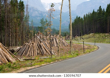 "Spruce forest affected bark beetle in the National Park ""Rocky Mountains."" Infected trees are cut down and folded into piles for burning - stock photo"