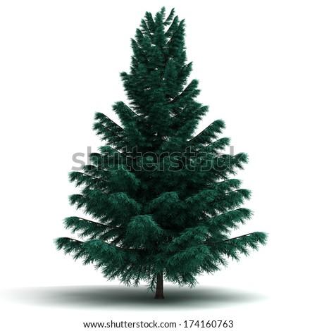 Spruce Pine Tree (isolated white background) - stock photo