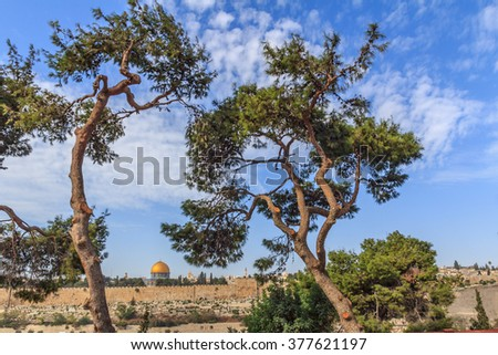 Spruce the monastery of St. Mary Magdalene on the Mount of Olives in Jerusalem against the backdrop of the old town - stock photo