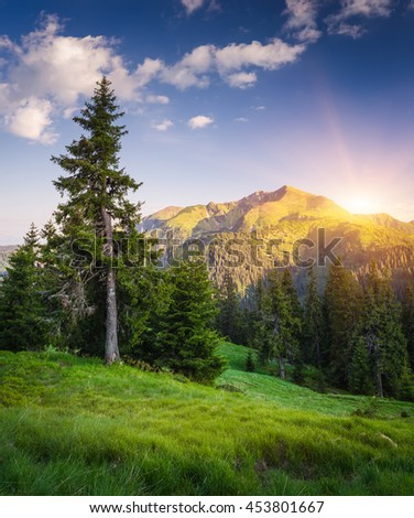 Spruce tree on a hillside near a pine forest. Summer landscape in the mountains. Sun over the mountain ridge. Morning light. Karpaty, Ukraine, Europe - stock photo